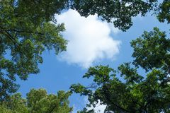 丰富的树围拢的白色云彩反对天空 免版税库存照片