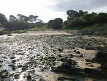 丰富的植被和自然狂放的海滩  免版税库存照片