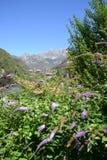 丰富的蝴蝶灌木丛和Resegone山美丽的蓝色花在背景中 免版税库存照片