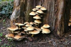 丰盛蘑菇 库存图片