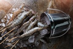 串未加工的虾或大虾 免版税库存图片