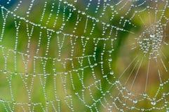 串珠的蜘蛛网 库存照片