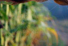 串珠的蜘蛛网 图库摄影