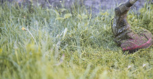 串起割草,草微粒的整理者飞行  免版税库存照片