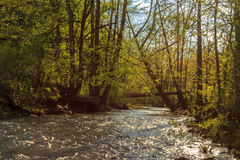 丹尼尔・布恩国家森林 免版税库存照片