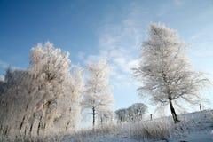 丹麦冬天 库存图片