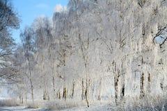 丹麦冬天 免版税库存照片