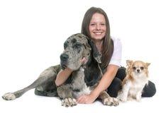 丹麦种大狗、奇瓦瓦狗和少年 库存照片