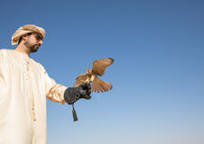 为一个沙漠猎鹰训练术展示被训练的年轻人共同的茶隼在迪拜,阿拉伯联合酋长国 库存照片
