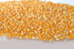 为做玉米花用的干玉米堆  免版税库存照片