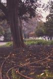 为公园水滴灌溉系统设置的永久水管在里斯本 免版税图库摄影