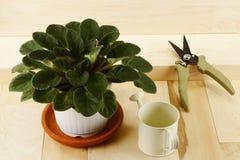 室内植物、喷壶和pruner 免版税库存照片