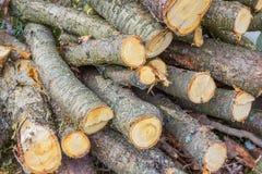 为冬天做准备,许多木柴硬木 库存照片