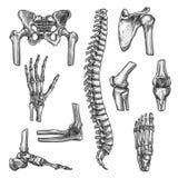 为医学设置的骨头和联接剪影设计 库存例证