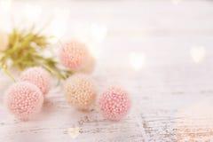 为华伦泰` s,母亲` s或妇女` s天开花构成 在老白色木背景的桃红色花 免版税库存图片