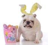 为复活节装饰的狗 图库摄影