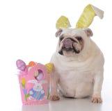 为复活节装饰的狗 库存照片