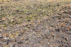 为播种准备的土壤 库存照片