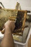 为收获非常有趣的蜂蜜特写镜头开盖的蜂窝开放unwaxing的叉子蜂农 图库摄影