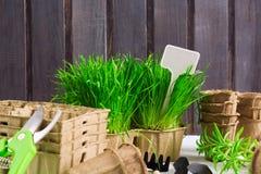 为春天幼木的园艺工具与发芽的草、有机罐、pruner和白色标签文本的在木背景 图库摄影