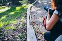 为灰鼠照相的摄影师 免版税库存照片
