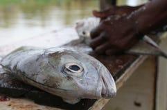 为炸鱼最后解救的鱼 免版税库存照片