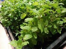 为烹调汤通常使用的菜植物 库存照片