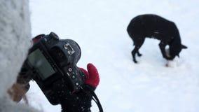 为狗照相的女孩 股票视频
