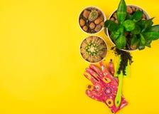 为罐的春天移植的植物做准备 罐,铁锹,在明亮的黄色背景的signet仙人掌 库存照片