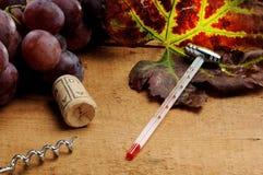 为葡萄酒酿造学的工具 库存照片