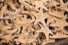 为装饰目的找到的美丽的海星 库存图片