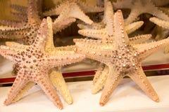 为装饰目的找到的美丽的海星 免版税库存图片