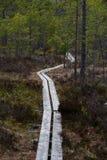 为走做的道路在一个美丽的森林里 免版税库存照片