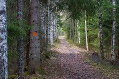 为走做的道路在一个美丽的森林里 库存图片