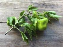为食物收集的新鲜的胡椒 免版税库存图片