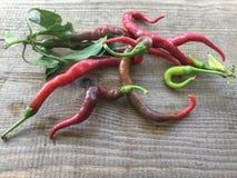 为食物收集的新鲜的胡椒 库存照片
