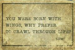 为什么爬行Rumi 图库摄影