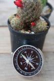 为仙人掌背景在的弄脏的指南针的特写镜头视图  库存图片