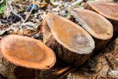 为建筑准备的木材片断 库存照片