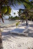 主持椰子 免版税库存图片