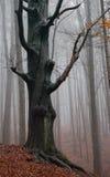 主要结构树 免版税库存图片