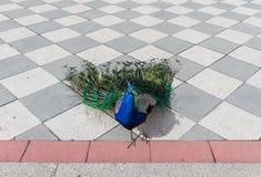 丽池公园,马德里,西班牙 库存图片