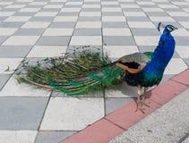 丽池公园,马德里,西班牙 免版税库存图片