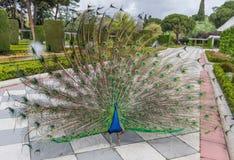 丽池公园,马德里,西班牙 免版税图库摄影
