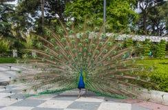 丽池公园,马德里,西班牙 免版税库存照片