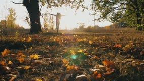 举她的手和享用落的秋叶的年轻女人 显示与日落的愉快的女孩快乐的情感在 股票视频