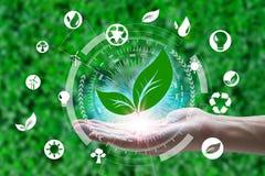 举行与在网络连接的叶子和环境象的手在自然背景,技术生态概念 免版税库存图片