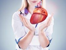 举行人体器官& x28的医生;heart& x29;灰色背景 免版税库存图片