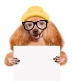 举行在他的爪子白色横幅的狗 库存照片