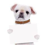举行在他的爪子白色横幅的狗 免版税库存照片